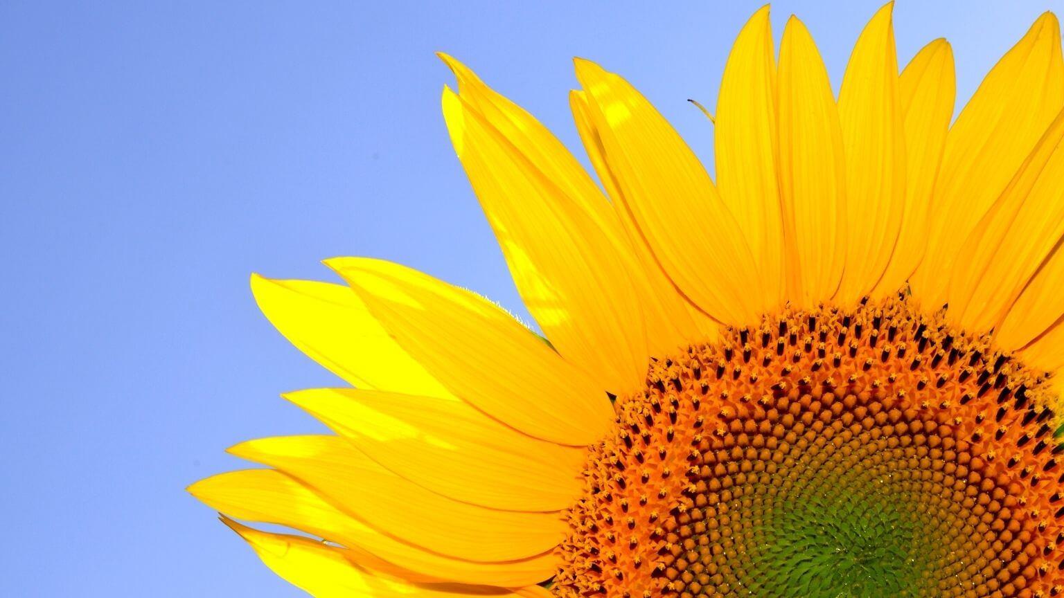 Comment votre rythme circadien influence votre vie ?